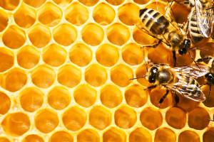 Topvrouwen vs Queen Bee's